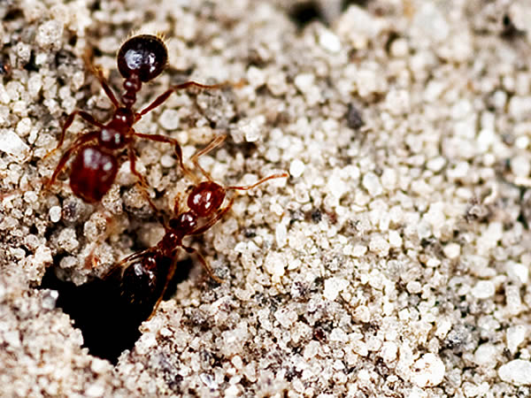 ants and tension free life Ant brood function as life preservers during floods detergent decreases the surface tension of life strategies of ants in unpredictable floodplain.